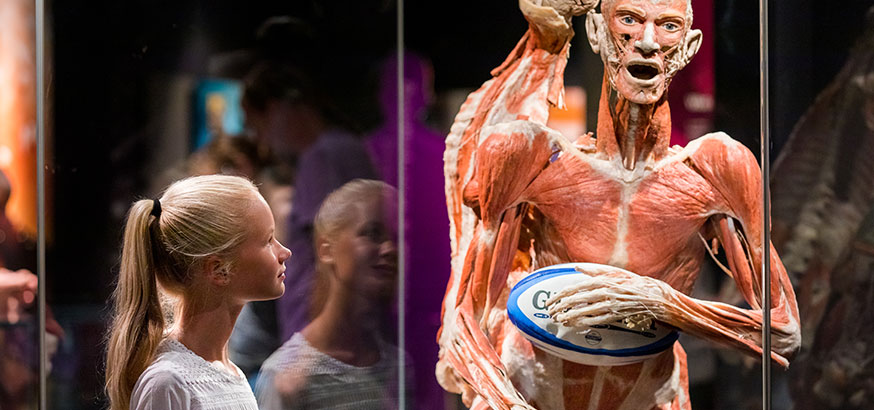 DH-Gallery-M-BODY-WORLDS-3